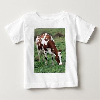 Red and White Holstein grazing Shirts