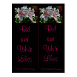 Red and White Lilies Bookmarks Postcard