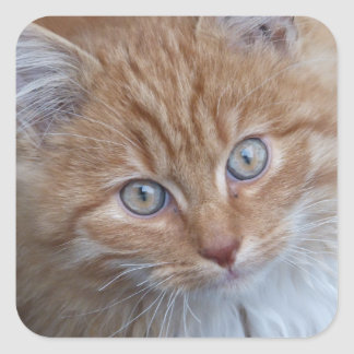 Red and White, Long-haired, Tabby Cat Face Sticker