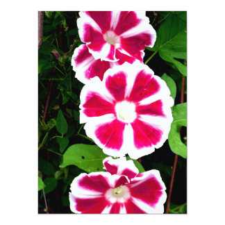 Red and White Morning Glories 5.5x7.5 Paper Invitation Card