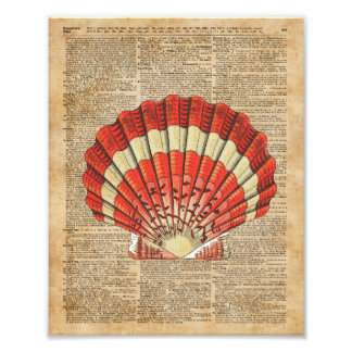 Red and White Ocean Sea Shell Dictionary Book Page Photo Print