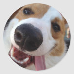 Red and White Pembroke Welsh Corgi Classic Round Sticker