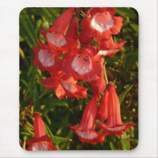 Red and White Penstemon Flowers Mousepad