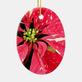 Red and White Poinsettia Ornament