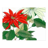 Red and White Poinsettia Postcard