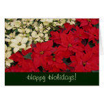 Red and White Poinsettias Holiday Card