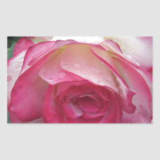 Red and white rose flowers with water droplets rectangular sticker