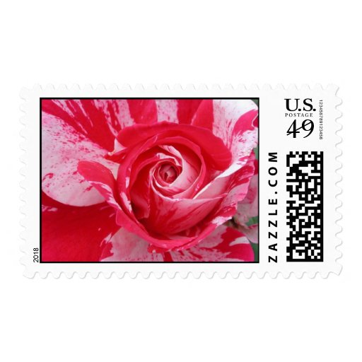 Red and White Rose Postage Stamp