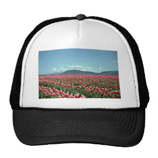 Red And White Tulip Field flowers Hat