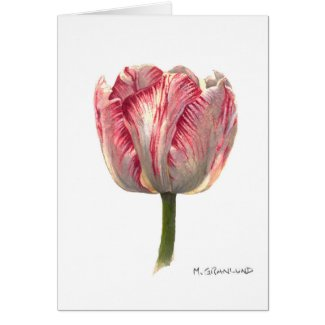 Tiger-Stripe Tulip Greeting Card