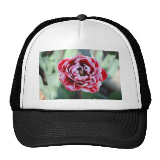 red and white tulip trucker hat
