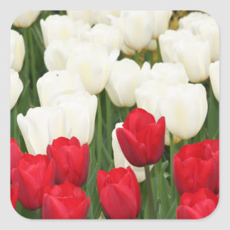 Red and White Tulips Stickers