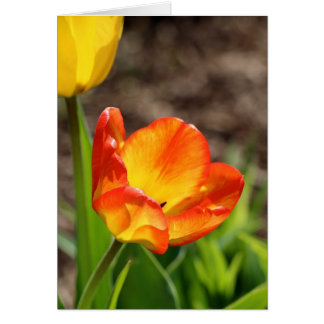 Red and yello tulip card