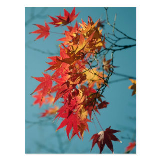Red and yellow autumn leaves on a blue background postcard