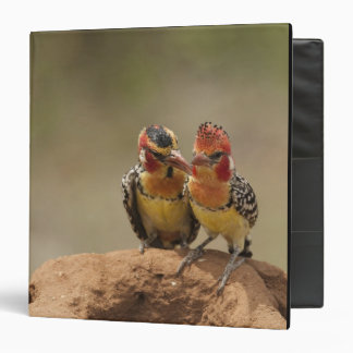 Red and Yellow Barbet eating termites Binders