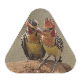 Red and Yellow Barbet eating termites Bluetooth Speaker