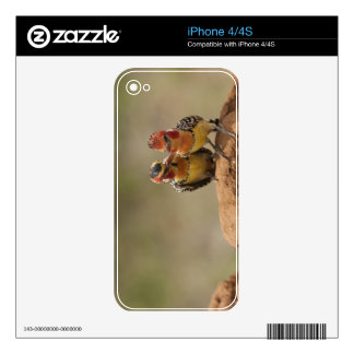 Red and Yellow Barbet eating termites Decal For The iPhone 4S