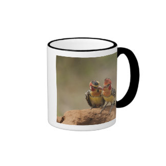 Red and Yellow Barbet eating termites Ringer Mug