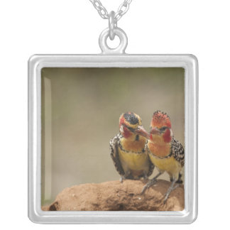 Red and Yellow Barbet eating termites Silver Plated Necklace