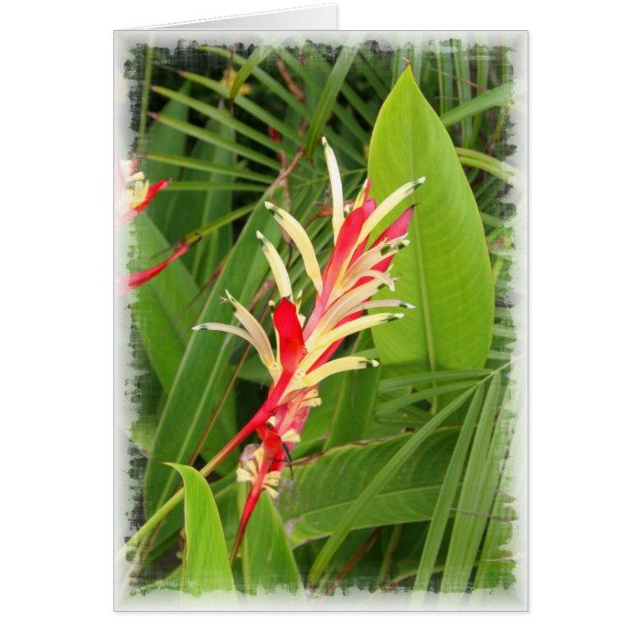 Red and Yellow Bromeliads Card