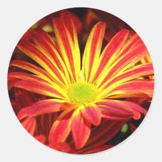 Red and Yellow chrysanthemum flowers customizable Classic Round Sticker