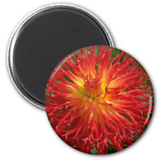 Red And Yellow Crazy Dahlia Multiple Items 2 Inch Round Magnet