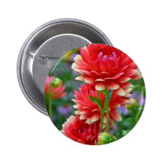 Red and yellow dahlia flowers pinback button