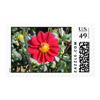 Red and yellow dahlia photo stamp