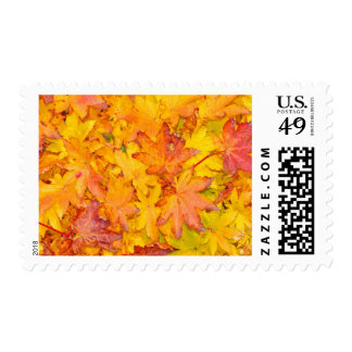 Red And Yellow Decorative Maple Leafs Fall Postage