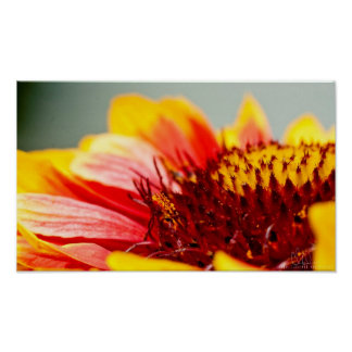 Red and Yellow Floral Closeup Print