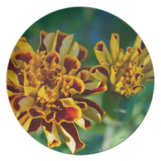 Red and Yellow Flower (Close-up) Plate