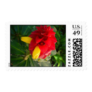 red and yellow flower postage stamp
