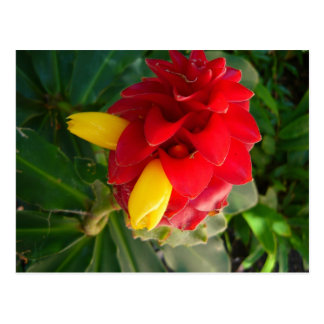 red and yellow flower postcard
