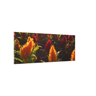 Red and Yellow Flowers Canvas Print