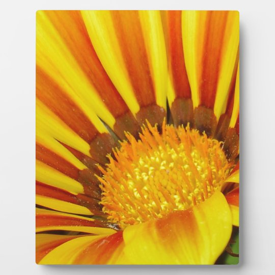 Red and Yellow Gazania Plaque