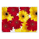 Red and Yellow Gerber Daisy Delight Greeting Card