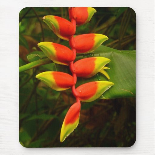 Red and Yellow Heliconia Flower Mousepad