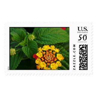 Red and Yellow Lantana Flower and Green Leaves Postage