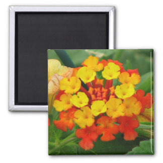 Red and Yellow Lantana Magnets