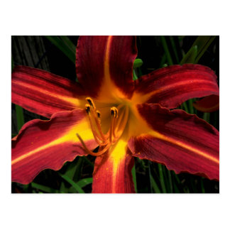 Red and Yellow Lilly Postcard