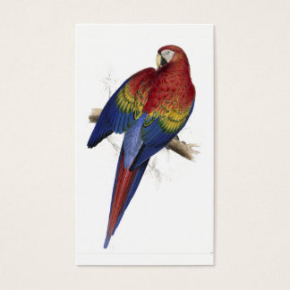 Red and Yellow Maccaw by Edward Lear Business Card