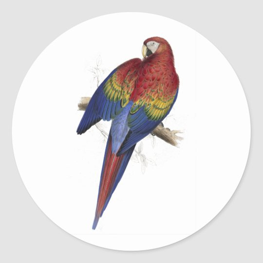 Red and Yellow Maccaw by Edward Lear Classic Round Sticker