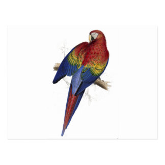 Red and Yellow Maccaw by Edward Lear Postcard