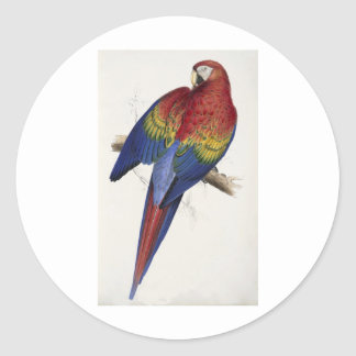 Red and yellow maccaw classic round sticker