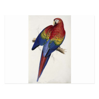 Red and yellow maccaw postcard