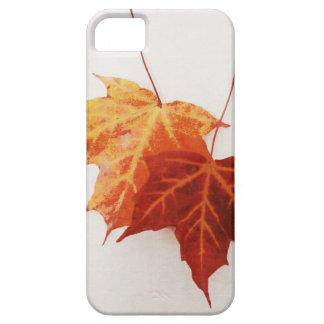 red and yellow maple leaves - autumn iphone 5 case