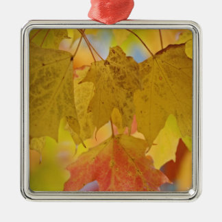 Red and yellow maple leaves, in the southern christmas ornament
