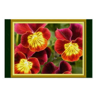Red and Yellow Pansies (Large Matted) Poster