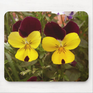 Red and Yellow pansies Mouse Pads