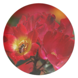Red and Yellow rose and its meaning Plate